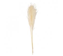 Dekoratiivkõrreliste kimp, kreemjas (3 tk / 80 cm)