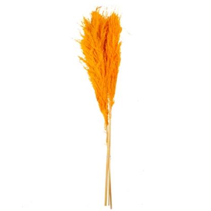 Dekoratiivkõrreliste kimp, oranž (3 tk / 80 cm)